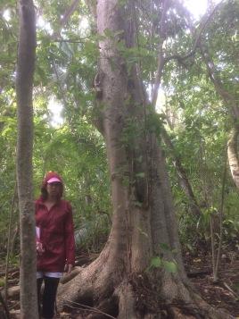 Heipoe -Le Petit Chaperon Rouge perdu dans la forêt