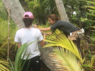 Heipoe and Carla tackling a large coconut tree