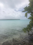 Not a bad lunch spot - with baby black tip reef sharks cruising in the shallows
