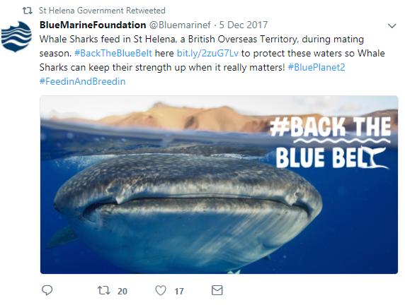 GBO St Helena whale sharks tweet